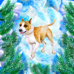 American Staffordshire Terrier symbol of New Year and Christmas greeting card design with fir tree branches watercolor on snow. Pitbull medium-sized, short-coated puppy in pines