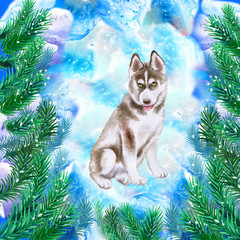 Husky puppy symbol of New Year and Christmas greeting card design with fir tree branches. Cute dog watercolor illustration isolated on snowy background postcard. Siberian Husky medium size dogs breed
