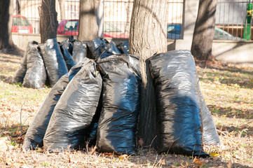 Black garbage bags full of dead leaves in the autumn cleaning service concept