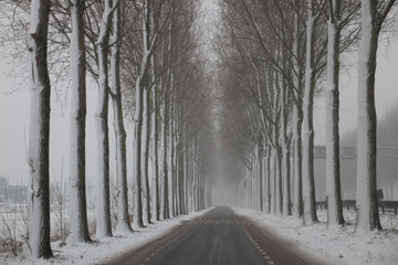 Snow on trees and sideway of a road between Moordrecht and Nieuwerkerk aan den IJssel