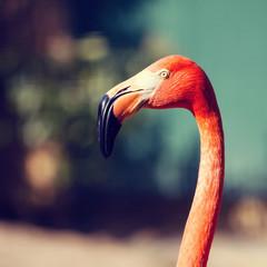 Close up of pink flamingo bird