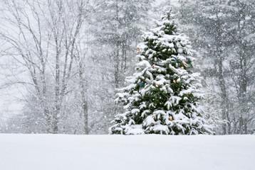 Hilltop Christmas Tree