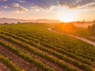 aerial view of vineyard at ar sunrise, Santa Ynez Valley, California