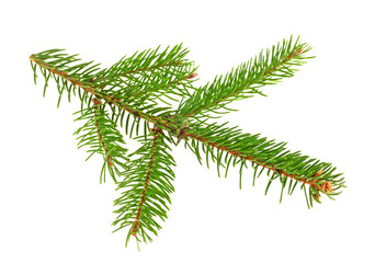 Fresh branch of fir tree on white background, closeup