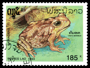 Postage stamp. Bufo marinus.