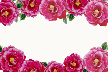 Pink rose flowers, frame