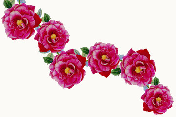 Pink rose flowers painting