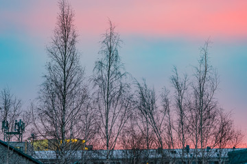 Pink beautiful sunrise on a dark blue sky in the early morning winter landscape