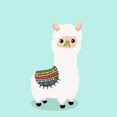 Cute alpaca  fluffy eat grass