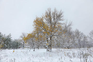 Snow in the mixed forest