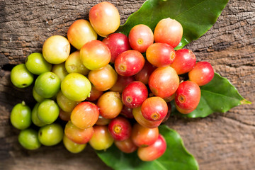 red   coffee beans on trees