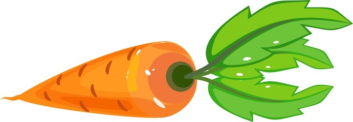 Cartoon orange carrot with green tops on white background