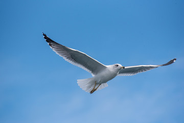 Seagulls are flying in sky over the sea