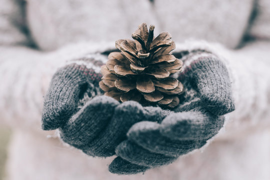 Girl holding pine cone in her hand. Winter decoration.