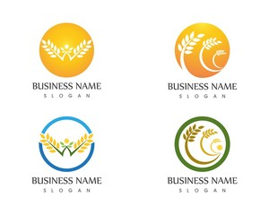 Agriculture wheat logo design template