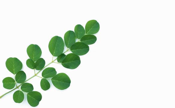 Moringa leaves on a white background.