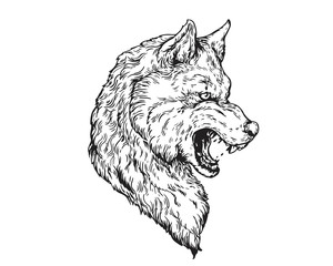 Detail Realistic Hand Drawing Angry Wolf Head Illustration