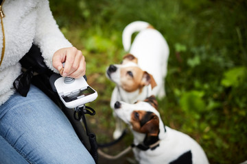 Cropped image of disabled woman in wheelchair with dogs outdoors