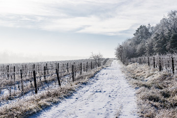The road thought the winter vineyard