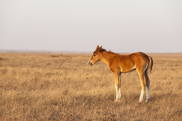Foal standing on the pasture.