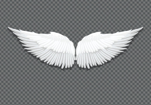 Vector realistic white angel wings on transparent
