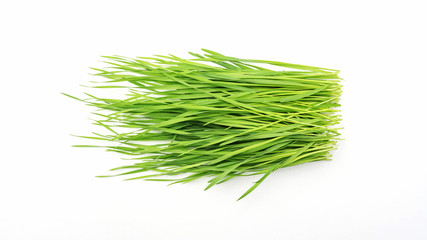 wheatgrass plant on a white background.