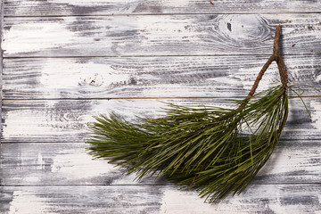 Green pine branch on a white wooden background