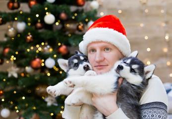 Alexey. Man and puppy husky, Santa Claus hat, close up