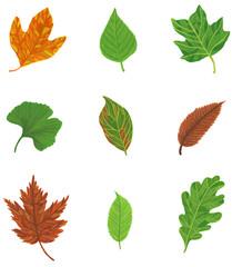 Leaf Types Illustration