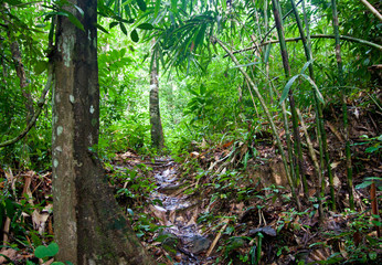 Pathway in a jungle