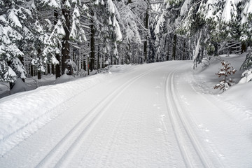 Cross country ski tracks in winter forest