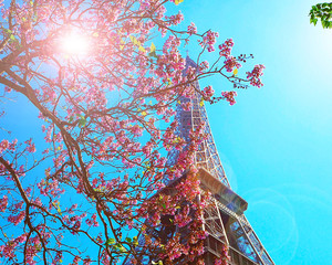 Paris, Eiffel tower on a background of pink flowers, magnolias, green trees. Spring in Paris