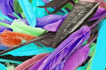 Colorful feather rainbow bird feathers. Goose dove duck parrot quill feathres... Rainbow colored background. Abstract.