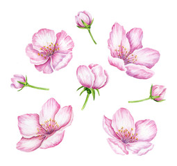 Spring Blossom. Cherry pink flowers. Blooming branch of fruit tree. Apple brunch. Floral border. Watercolor illustration