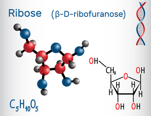 Ribose (β-D-ribofuranose) molecule, it is a pentose monosaccharide (simple sugar), it forms part of the backbone of RNA. Structural chemical formula and molecule model
