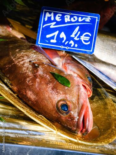 Fresh Grouper on fish market in Paris (France)