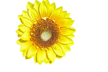 Fake Sunflower on white background