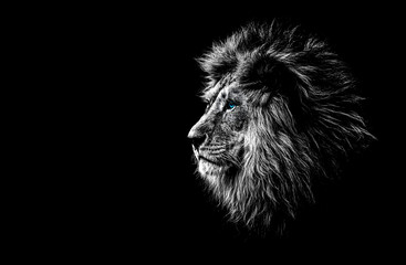 In de dag Leeuw lion in black and white with blue eyes