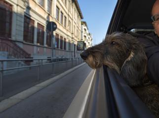 Selfie con il cane in viaggio