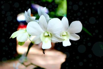 The white flower background.