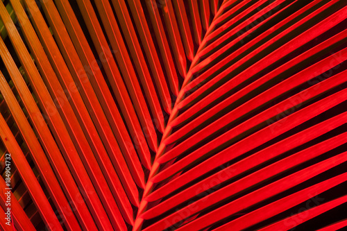 Tropical Leaves Of Palm Tree In Red Colors Close Up Shot Nature Creative Pattern Abstract Botanical Background Image Exotic Flora