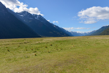 Meadow and valley in New Zealand