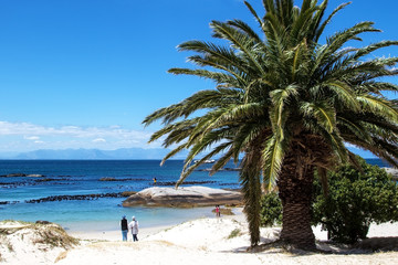 Scenic view at sandy beach with clear blue sky and one palm tree. Boulders Beach, South Africa