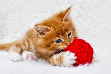 Fototapete - small red kitten is played with a ball of yarn
