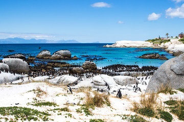 View of Boulders Beach, South Africa