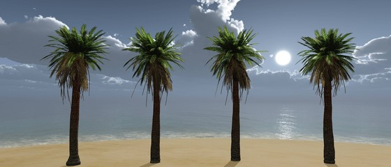 row of palm trees on the beach, tropical beach