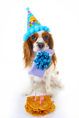 Happy birthday dog photo. Cavalier king charles spaniel puppy dog celebrate 3. birthday. Three years old puppy with birthday cake and gift. Dog holding gift on white background. Postcard greeting card