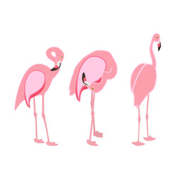 Colorful pink flamingo isolated on white background. Vector Illu