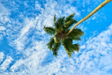 Coconut tree & sky background, Seychelles