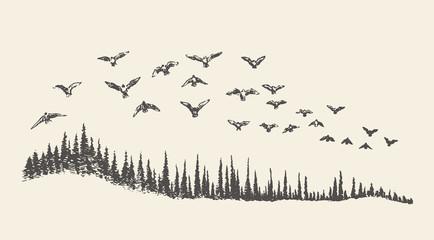 A flock of birds drawn vector illustration, sketch